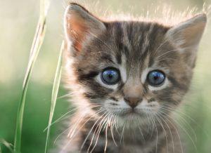 ネコの口内炎回復例